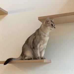 猫と暮らす小さな家